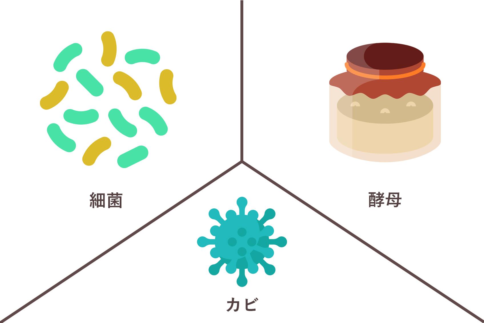 細菌 酵母 カビ