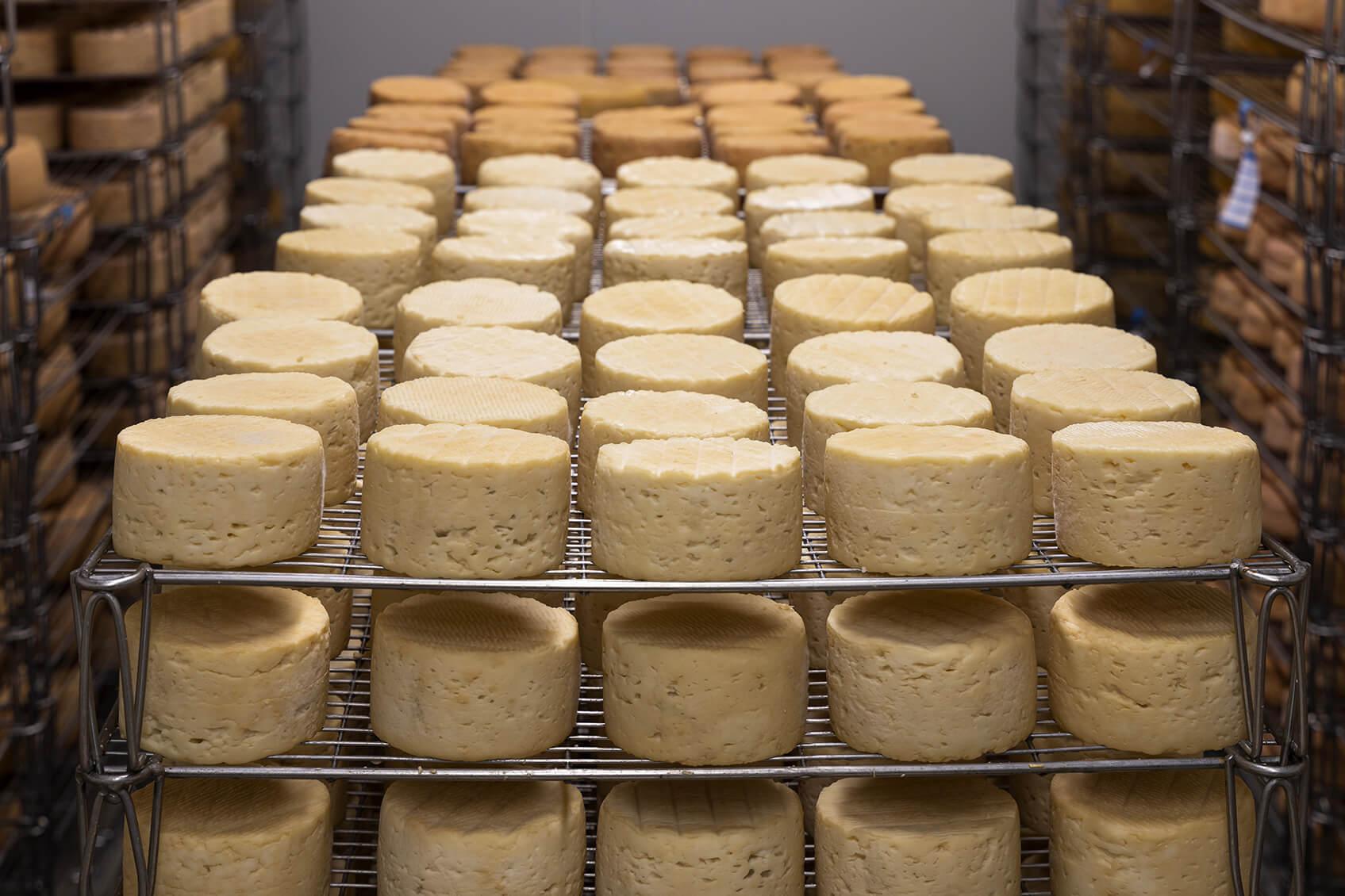 チーズ 乳酸発酵